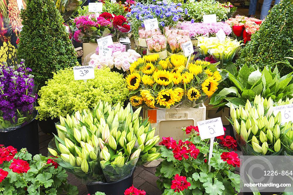 Flowers for sale in the Bloemenmarkt, flower market, Amsterdam, Netherlands