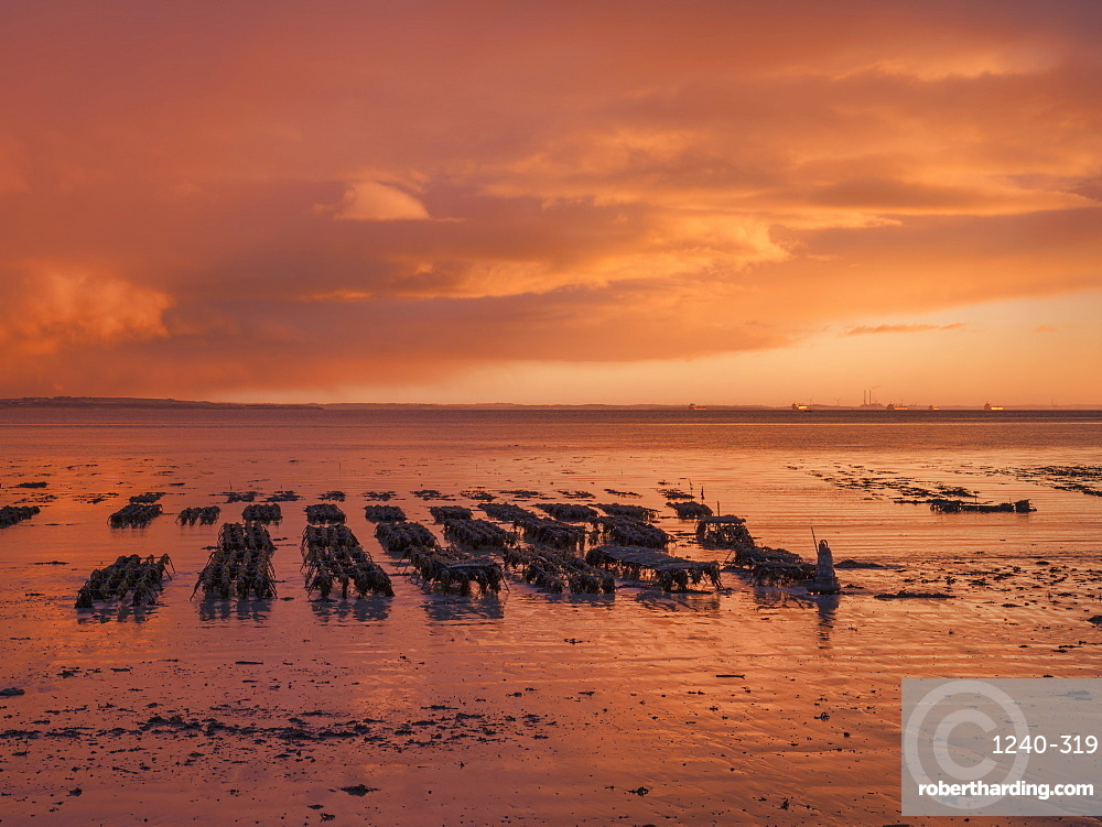 Shannon Estuary, County Clare, Munster, Republic of Ireland, Europe