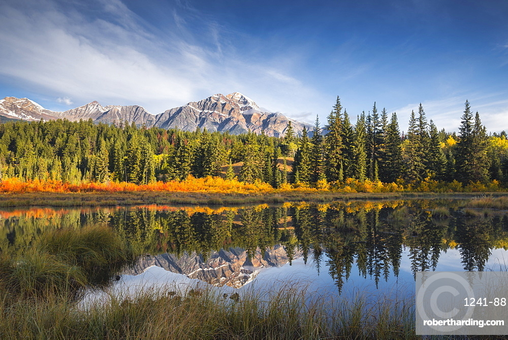 Pyramid Mountain reflected in a lake with Autumn colour, Jasper National Park, Canada. landscape, Autumn, rocky mountains