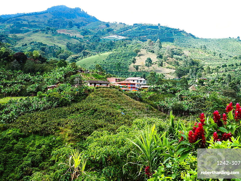 Hillside farm with coffee and banana plants, Jardin, Antioquia, Colombia, South America