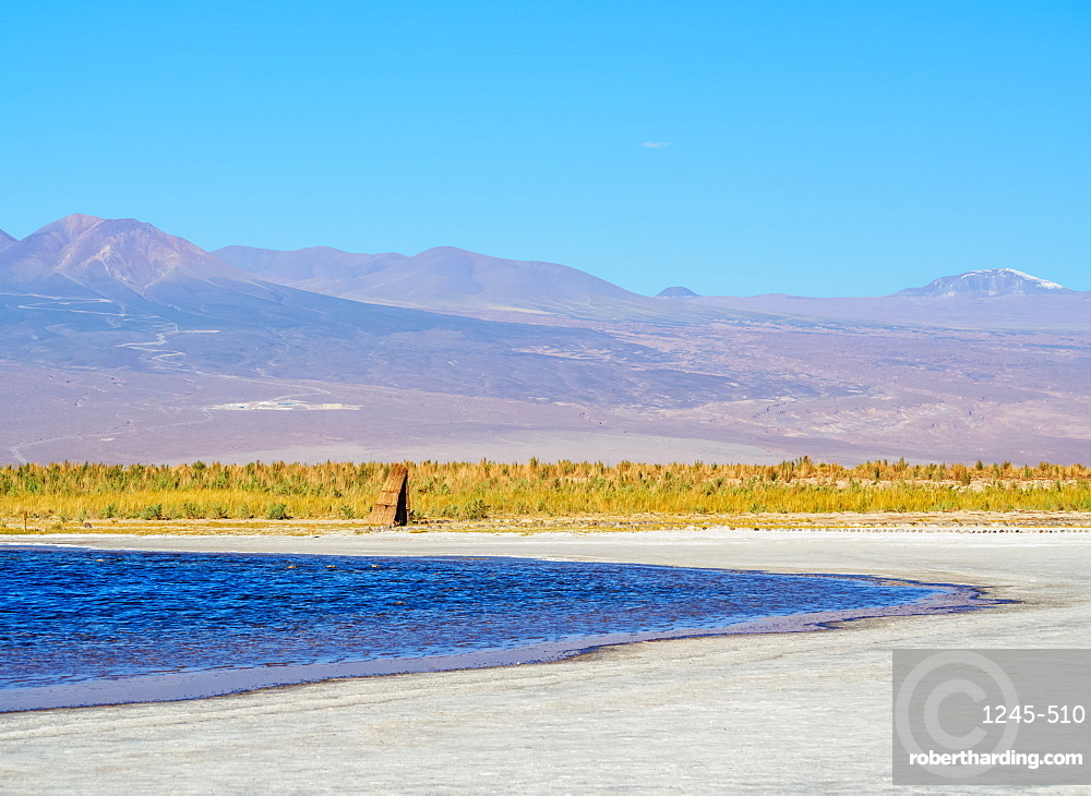 Laguna Baltinache, Salar de Atacama, Antofagasta Region, Chile, South America