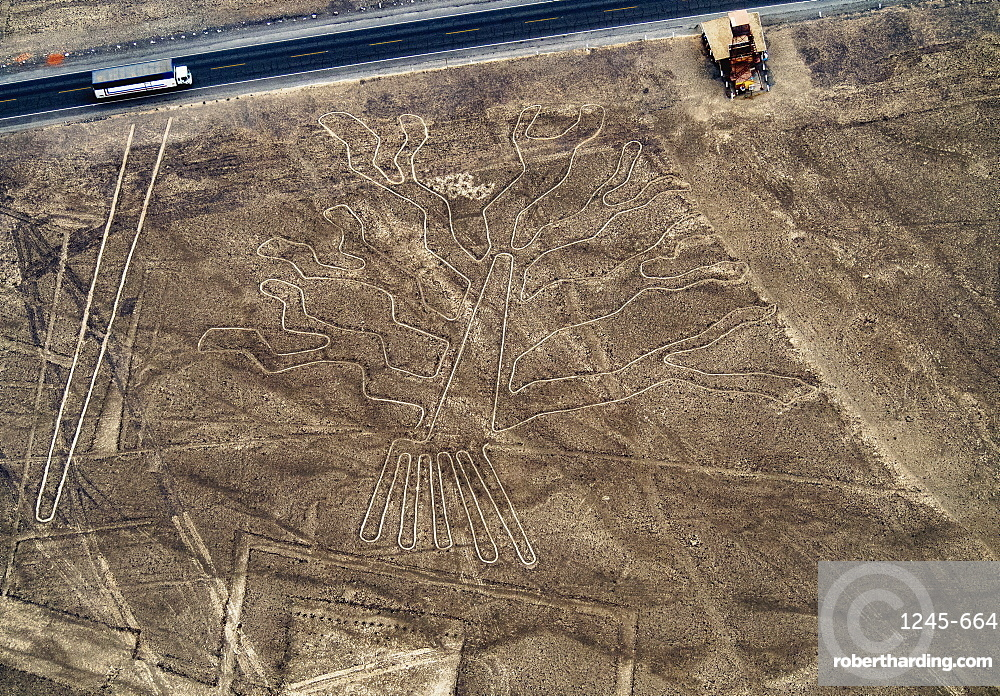 The Tree Geoglyph, aerial view, Nazca, UNESCO World Heritage Site, Ica Region, Peru, South America
