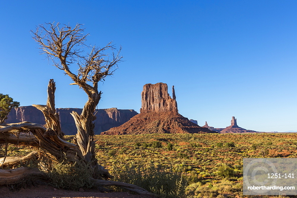Rock Formations And Tree Monument Stock Photo