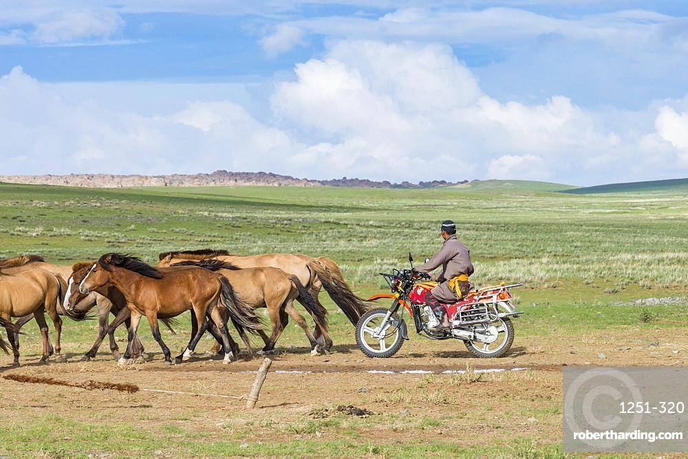 Mongolian nomadic man on motorbike gathering horses. Middle Gobi province, Mongolia.