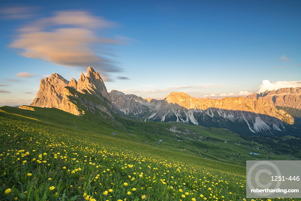 Seceda group with Globeflowers in the foreground in summer. Ortisei, Bolzano province, Trentino Alto Adige, Italy.