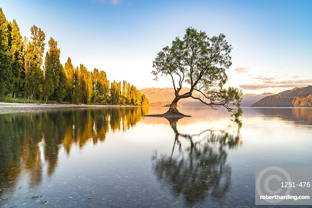 The lone tree in Lake Wanaka in the morning light. Wanaka, Queenstown Lakes district, Otago region, South Island, New Zealand.
