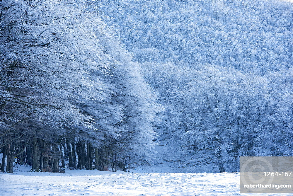 Forest with snow in winter, Monte Cucco Park, Apennines, Umbria, Italy, Europe