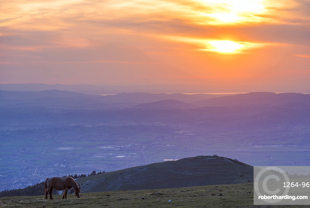Horse in the fields, Mount Subasio, Umbria, Italy, Europe