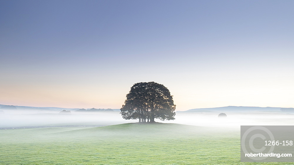 Copse of trees and low lying mist at Airton near Malham, Malhamdale, Yorkshire Dales, UK