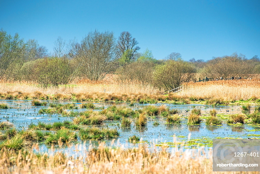 Wetlands at Wicken Fen National Nature Reserve, Cambridgeshire, East Anglia, England, UK.