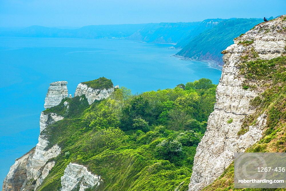 Beer Head looking towards Branscombe Mouth, between Beer and Branscombe on the Jurassic coast in Dorset, England, UK.