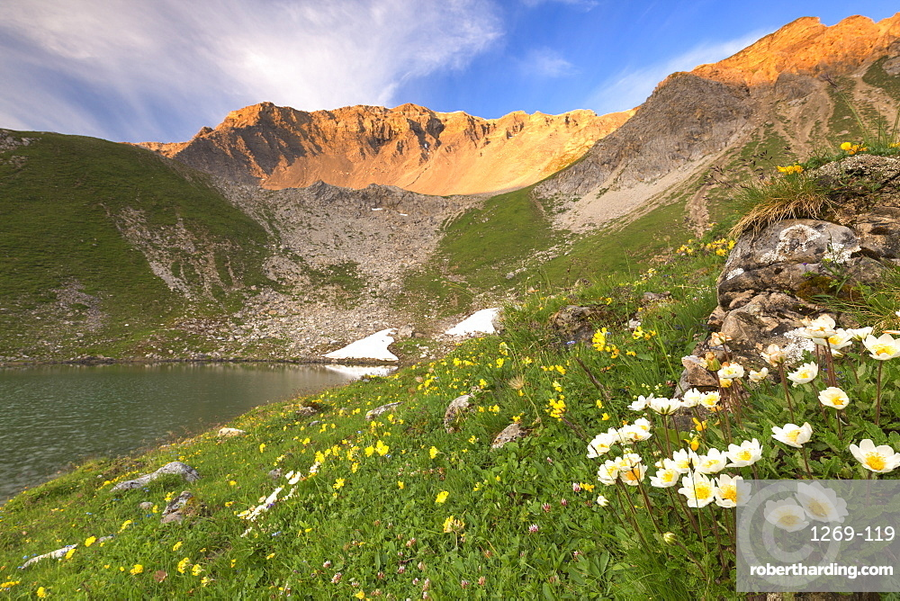 Summer blooms at Lej da Prastinaun, Arpiglia Valley (Val Arpiglia), Engadine Valley, Graubunden, Switzerland, Europe