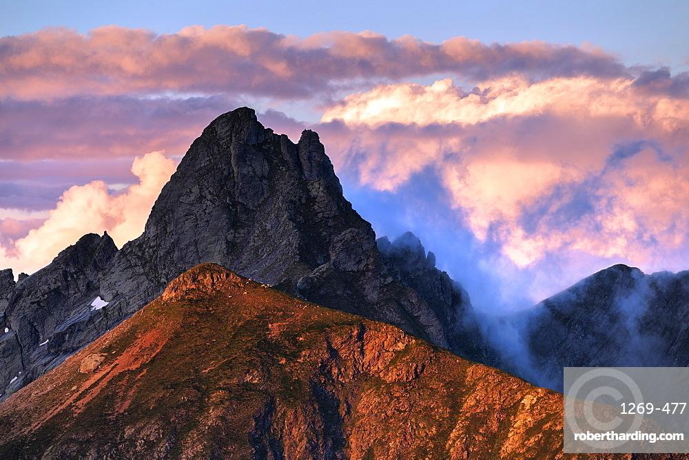 Sheep on a sunlit ridge, Valgerola, Orobie Alps, Valtellina, Lombardy, Italy, Europe