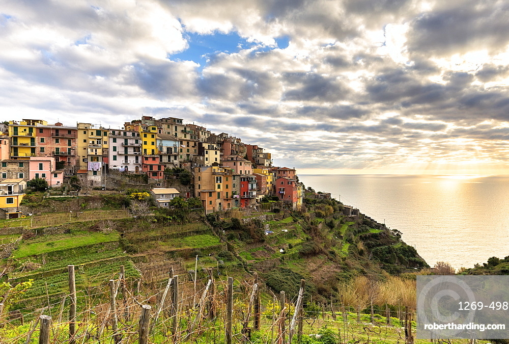 Colourful houses of Corniglia at sunset, Cinque Terre, UNESCO World Heritage Site, Liguria, Italy, Europe