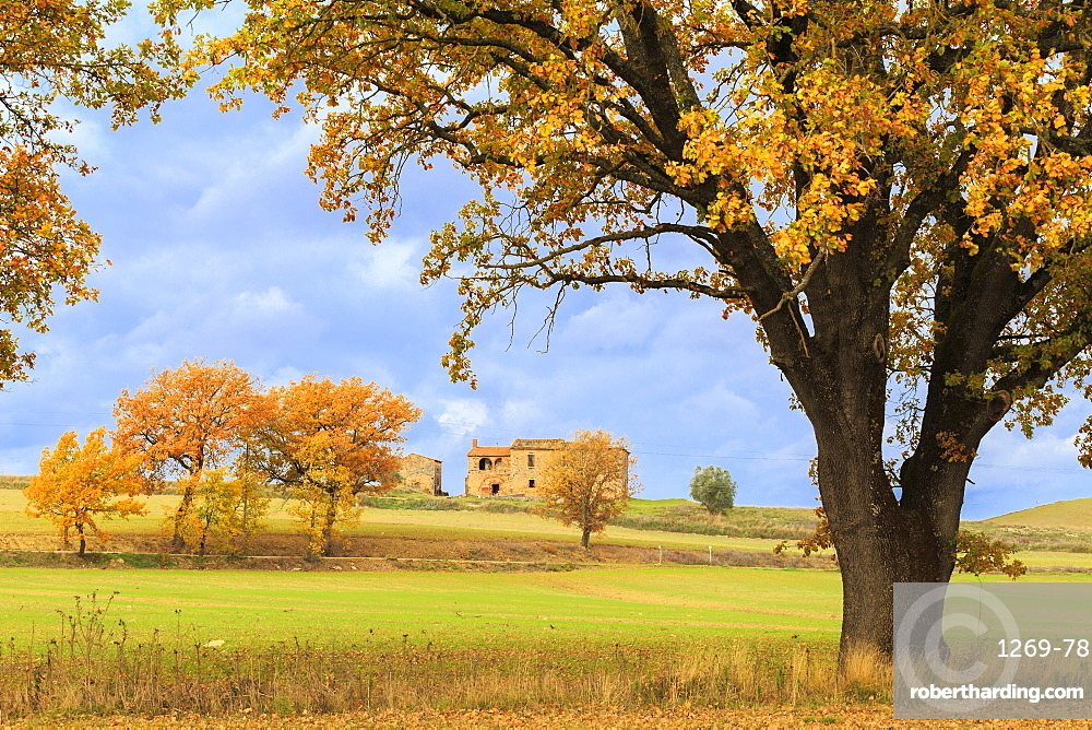 Isolated cottage in the Tuscan countryside during autumn. Asciano, Val d'Orcia, Siena province, Tuscany, Italy.