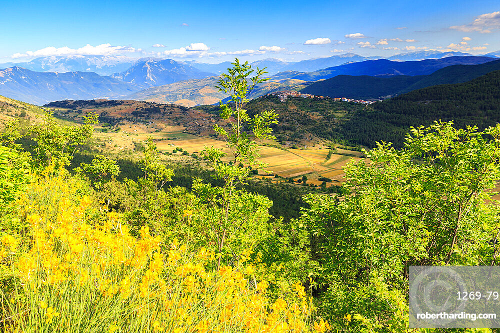 Blossoming of broom in front of the village of Castelvecchio Calvisio, Abruzzo, Italy, Europe