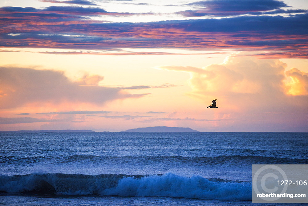 Pelican at Playa Buena Vista Beach at sunrise, Guanacaste Province, Costa Rica, Central America