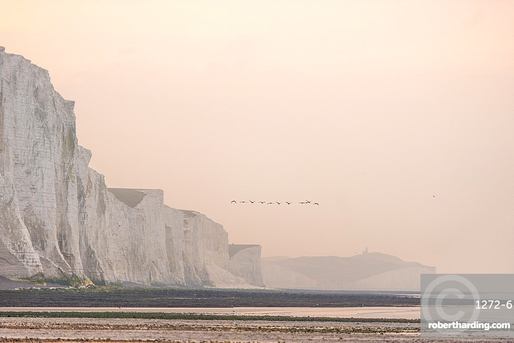 View from Cuckmere Haven of geese flying over the Seven Sisters chalk cliffs, South Downs National Park, East Sussex, England, United Kingdom, Europe