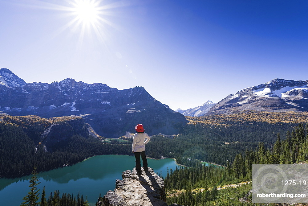 Hiker looking at the view of Alpine mountains and Lake O'Hara from the Alpine circuit trail