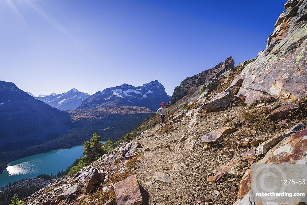 Woman hiker on the Alpine Circuit Trail at Lake O'Hara, British Columbia, Canada
