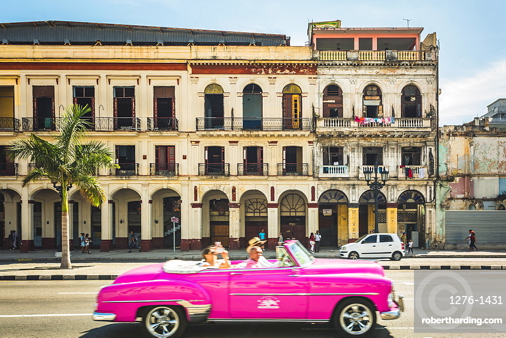 A pink American classic car next to El Capitolio in Havana, La Habana, Cuba, West Indies, Caribbean, Central America