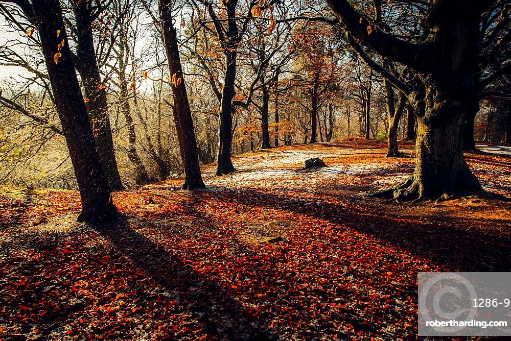 Autumn woodland, Scotland, United Kingdom, Europe