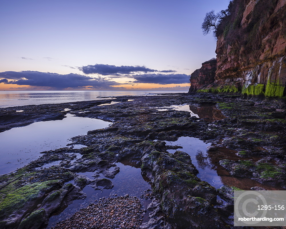 Dawn on the beach with a tree growing precariously from the cliff at Ladram Bay, Sidmouth, Devon, UK