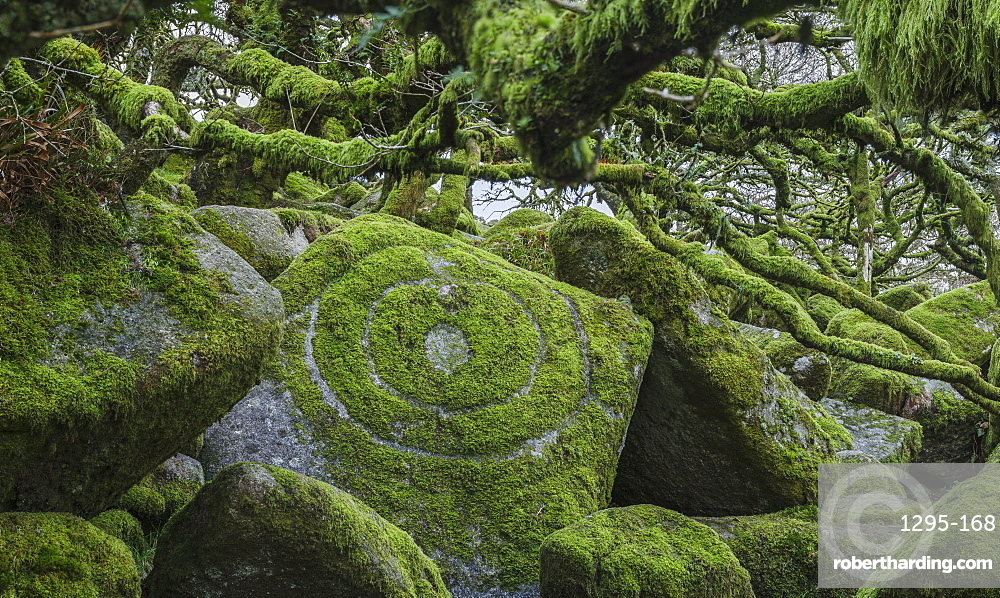 Circles in moss amongst the distinctive gnarled moss & fern covered oaks in Wistman's Wood, near Princetown, Devon UK