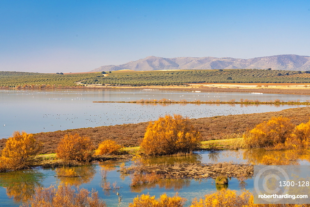 Laguna de Fuente Piedra Nature Reserve and residence for many birds from April till August including flamingos, Malaga, Andalucia, Spain, Europe