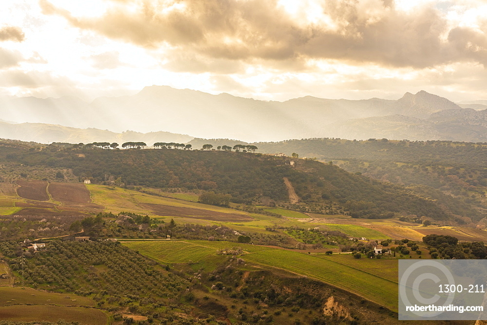 Green fields and mountain landscape of the surroundings of Ronda