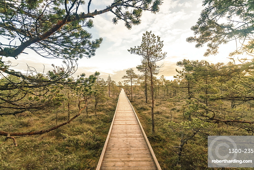 Lahemaa National Park early in the morning in Autumn, Lahemaa is a park located in northern Estonia, 70 kilometers from Tallinn