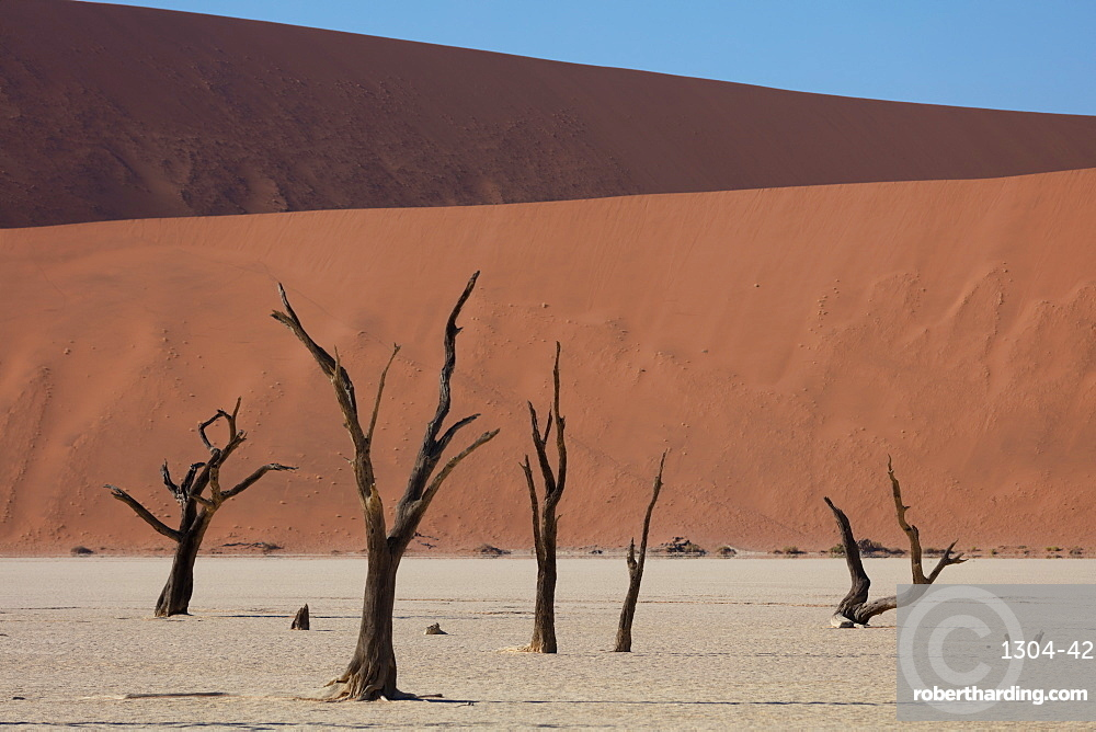 900 year old dead trees within Deadvlei amongst some of the highest dunes in the world.
