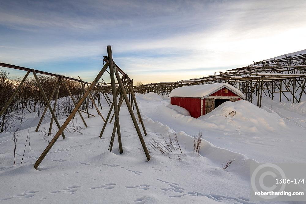 Fresh snow surrounds cod racks and fishermen houses in winter, Lofoten, Arctic, Norway, Europe