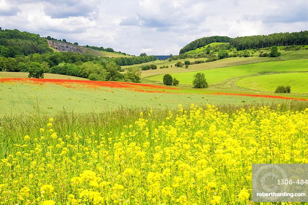 Poppy field with oil seed rape set in beautiful Derbyshire countryside, Baslow, Derbyshire