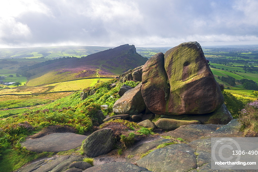 The Roaches and view of Hen Cloud in summer covered in heather, Peak District National Park, Staffordshire