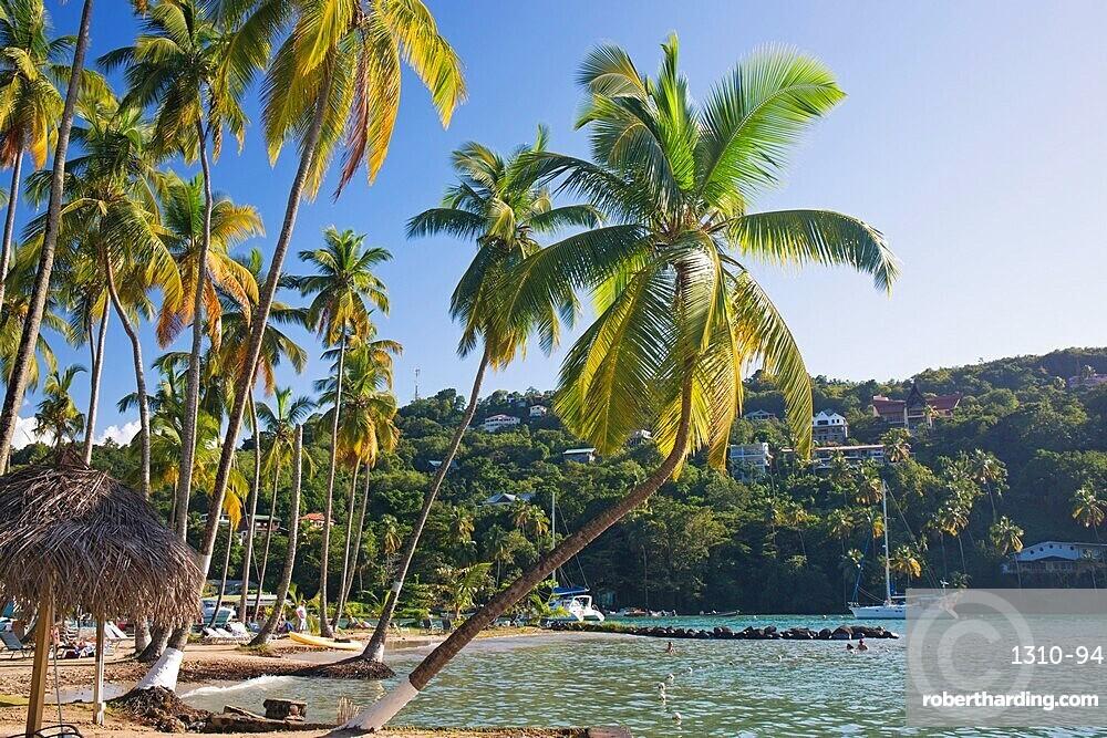 Coconut palms at the water's edge, LaBas Beach, Marigot Bay, Castries, St Lucia, Lesser Antilles, West Indies