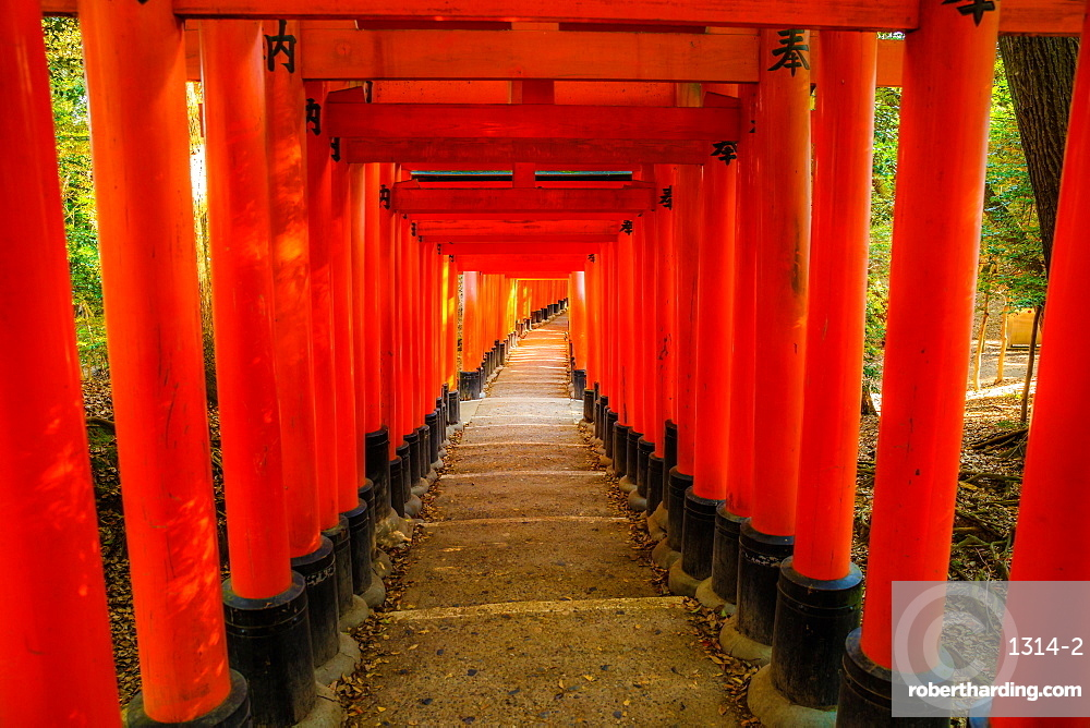 The red Torii gates of the famous Fushimi Inari Taisha, the most important Shinto sanctuary and the oldest in Kyoto, Japan, Asia