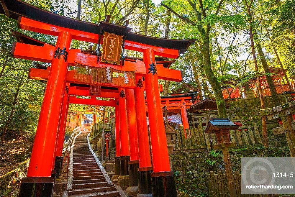 Thousand torii gates, Fushimi Inari Taisha, the most important Shinto shrine, Kyoto, Japan, Asia