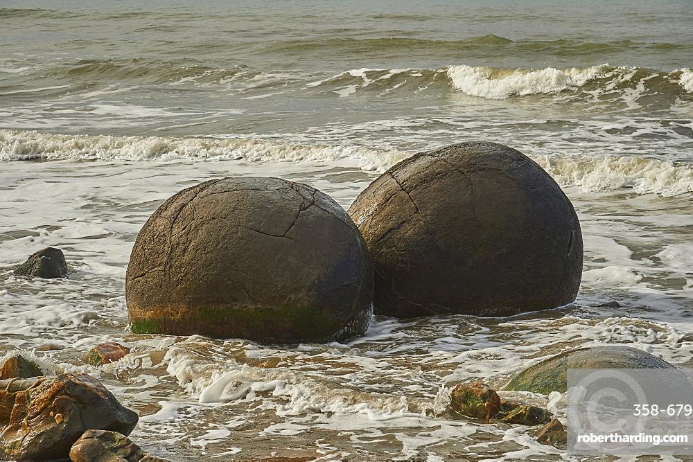 Moeraki Boulders are a group of very large spherical ???stones??? on Koekohe Beach near Moeraki on New Zealand???s Otago coast