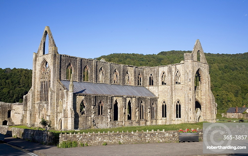 Late afternoon view of South and West sides of Tintern abbey