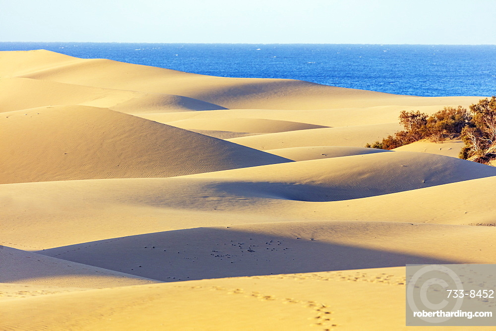 Europe, Spain, Canary Islands, Gran Canaria, Nature Reserve Dunes of Maspalomas