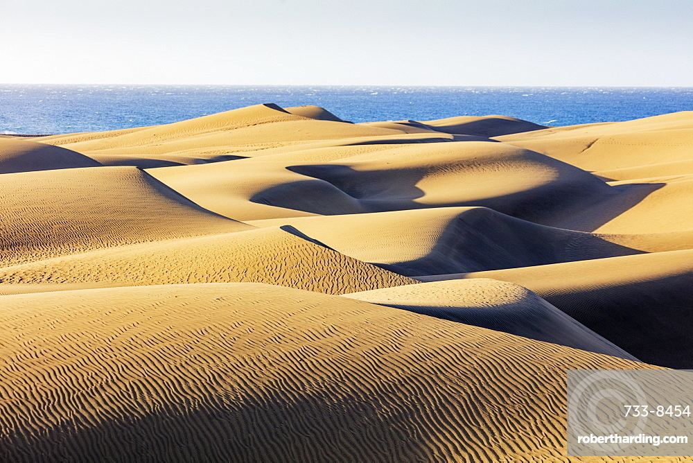 Europe, Spain, Canary Islands, Gran Canaria, Nature Reserve Dunes of Maspalomas