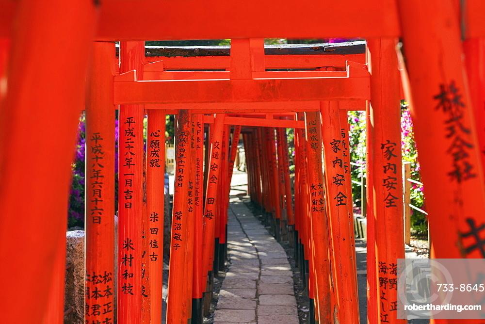 Nezu Shrine, torii gate, Tokyo, Japan, Asia