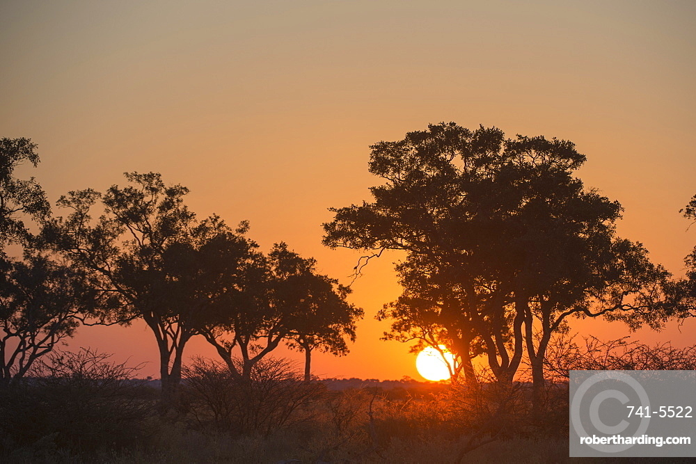 Sunset in the Savuti marsh, Botswana, Africa