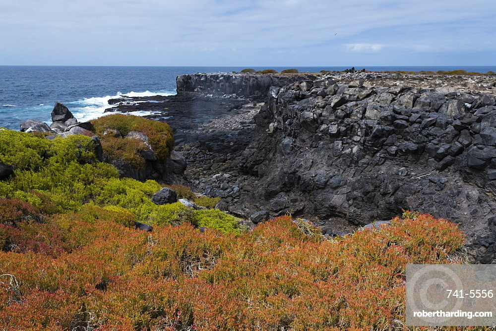 Colorful vegetation on Punta Suarez, Espanola Island, Galapagos Islands, UNESCO World Heritage Site, Ecuador, South America