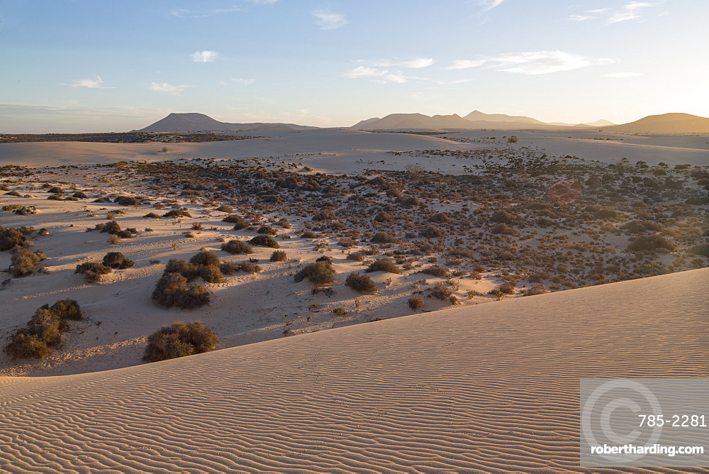 The dramatic Dunas de Corralejo in evening light on the volcanic island of Fuerteventura with mountains beyond, Fuerteventura, Canary Islands, Spain, Atlantic, Europe