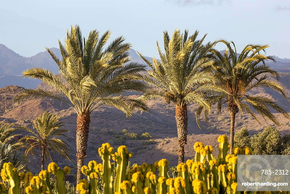 Palm trees and mountains near Maspalomas, Gran Canaria, Canary Islands, Spain, Atlantic, Europe
