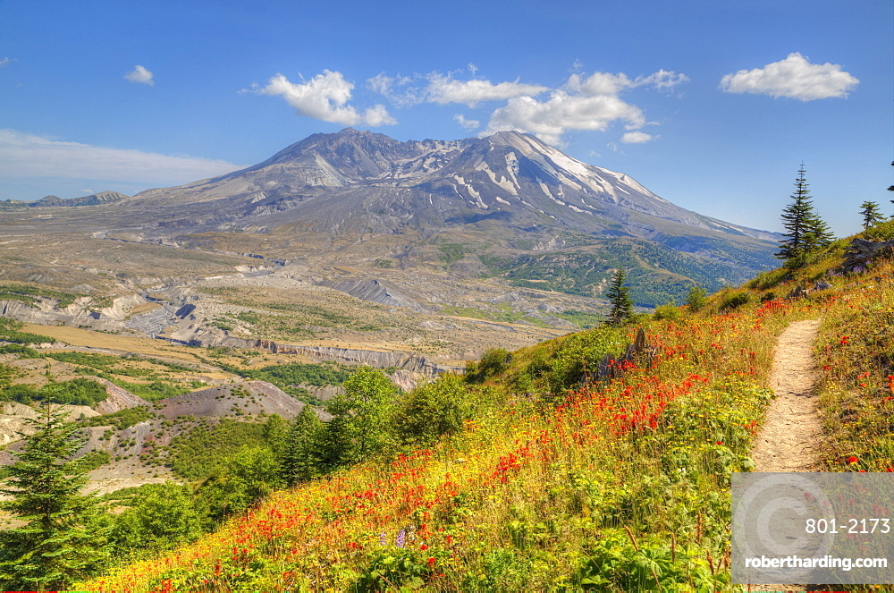 Mt St Helens with Wild Flowers, Mt St Helens National Volcanic Monument, Washington, USA
