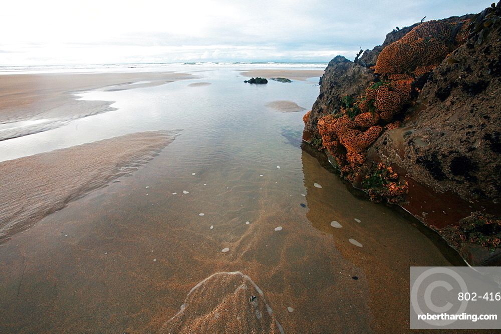 Low tide, Bude, Cornwall, England, United Kingdom, Europe