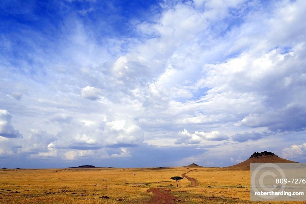 African savanna, golden plains against blue sky with clouds, Masai Mara Game Reserve, Kenya, East Africa, Africa